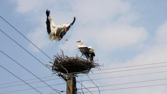 """Ostra walka o gniazdo. """"Takie akrobacje widziałem po raz pierwszy"""""""