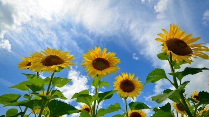 Prognoza pogody na dziś: słoneczna i ciepła sobota. Z pewnymi wyjątkami