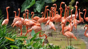 Dzikie zwierzęta wymierają coraz szybciej. Jeszcze 40 lat temu było ich o połowę więcej