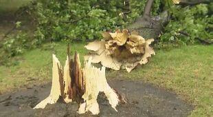 Wiatr łamał drzewa